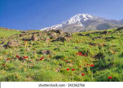 Amazing green meadow with red poppies and volcano Damavand in the background, highest peak in Iran