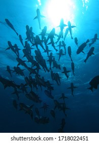 Amazing group of fishes under sun light