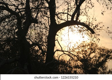 Amazing hazy morning with sun peaking among trees. Sun rays creating very mystical and beautiful atmosphere. Spooky and lovely. Quiet, peaceful and relaxing. Autumn, warm, fresh.
