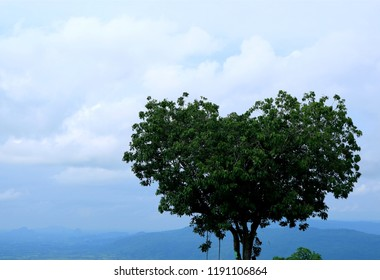 Amazing Heart Shape Tree Created by the Nature, Phitsanulok Province of Thailand