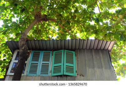 Amazing house under large tree canopy, home with wooden window overshadow by big Terminalia catappa tree, green leaf make shade and fresh air, Ho Chi Minh city, Vietnam