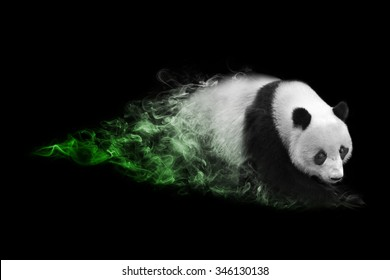 amazing image of a great panda, chinese symbol for friendship and peace, animal kingdom, tattoo, bamboo, wildlife photo of a panda, zoo