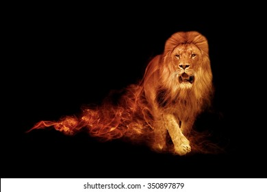Amazing image of a lion in a black background, tattoo, animal kingdom, african wildlife photo, zoo