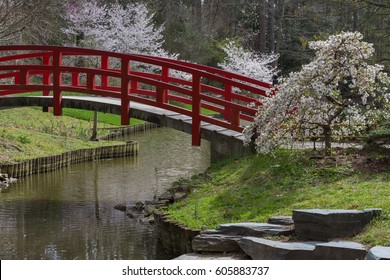 Amazing Japanese garden scene at Duke gardens in Durham, NC.  The cherry blossoms are in bloom.
