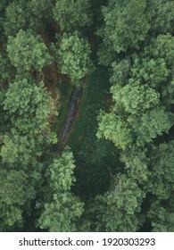 Amazing jungle in drone photo