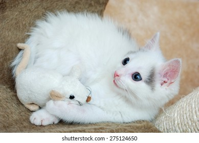 Amazing kitten playing with a plush mouse