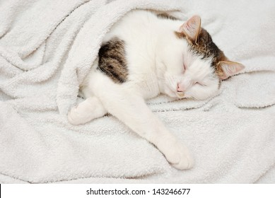 Amazing lady cat sleeping in the human bed