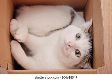 Amazing lady-cat lying in the carton box