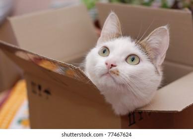 Amazing lady-cat sitting in the carton box