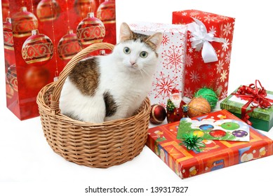 Amazing lady-cat sitting in the wicker basket among the Christmas presents and toys