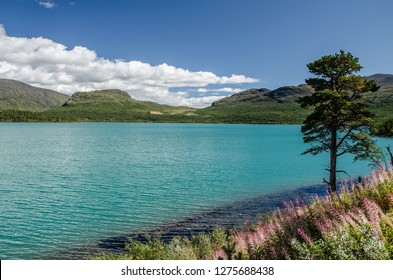 Amazing Lake view in Jotunheimen National Park with blue sky above and green tree on the right