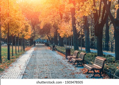 Amazing landscape of autumn season park. Glowing with some effect In morning at park. Yellow trees and fallen leaves. Wroclaw, Poland. Colorful toning effect.
