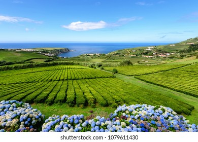Amazing landscape in the Azores islands in Portugal. Sao Miguel Island is a great holiday destination and great tourist attraction.