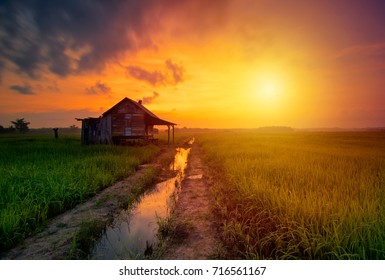 Amazing landscape with green paddy field  with beautiful sunrise background, beautiful natural wallpaper