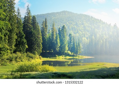 amazing landscape with mountain lake among forest. beautiful summer scenery in the morning. coniferous trees on the grassy shore. hazy and sunny weather with blue sky