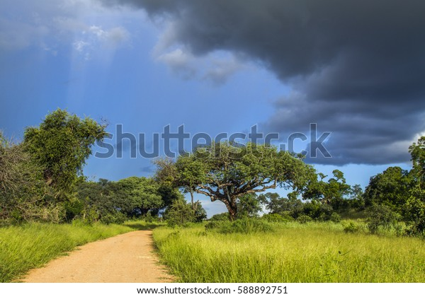amazing landscape in wide angle, stormy weather and green vegetation, Kruger, South Africa