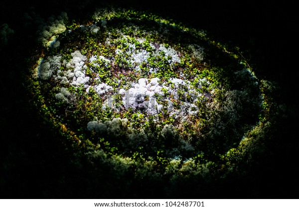 Amazing light flare on white and green  moss in the wood. Headlight in night.