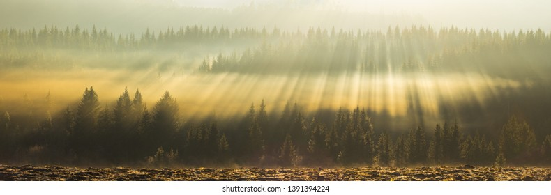 Amazing light show above the tree tops of boreal forest in rural area of Trondheim. Autumnal fog and moody, orange light. Norway.