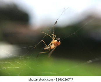 Amazing macro of spider