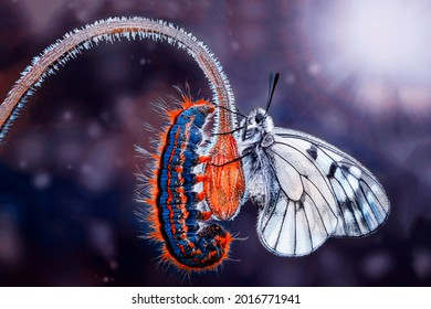 Amazing moment ,Monarch Butterfly , caterpillar, pupa and emerging with clipping path.