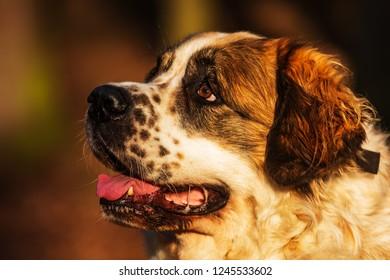 amazing Moscow watchdog