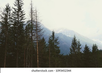 Amazing mountain silhouettes near forest - Vysoke Tatry in Poland