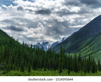 Amazing mountainous landscape of mountain peaks and a green strip of forest in cloudy weather.
