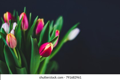 An amazing multi-colored tulips bouquet in a glass vase on the dark background.