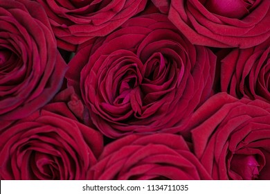 Amazing natural texture of red roses. Roses top view. Marsala roses background. Macro photo of red rose petals. Belarus, Minsk.