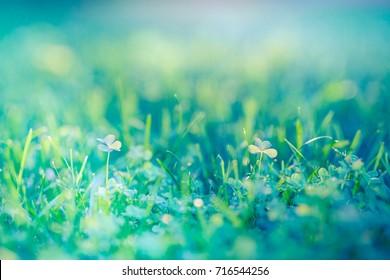Amazing nature closeup green grass meadow background under sunlight