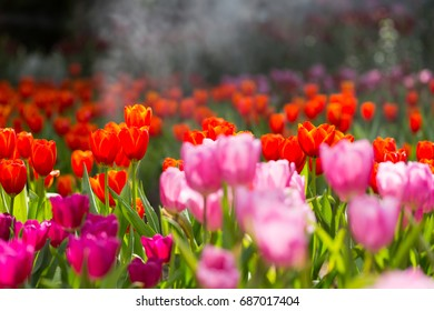 Amazing nature concept tulips flowers