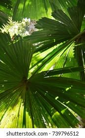The amazing nature at Daintree Rainforest, Queensland, Australia