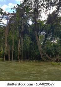 the amazing nature of Jamaica