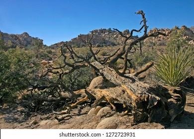 Amazing nature of the Joshua Tree National Park which is part of dry Mojave Desert in California. Lots of rocks and cacti