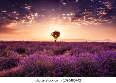 Amazing nature landscape, lavender field with single tree in sunrise glow with night dark starry sky, natural summer travel background, Provence, France