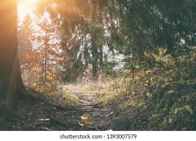 Amazing nature landscape, sunny vintage forest with path to the light, natural outdoor travel background, National park Slovak paradise (Narodny park Slovensky Raj), Slovakia (Slovensko) - Shutterstock ID 1393007579