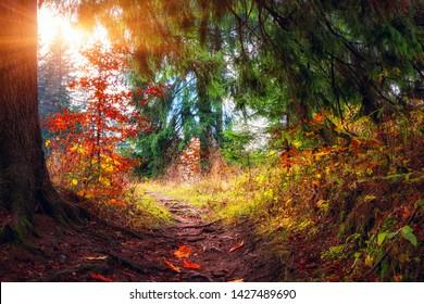 Amazing nature landscape, tourist route in the sunny autumn forest, outdoor travel background, Narodny park Slovensky Raj (National park Slovak paradise), Slovakia (Slovensko)