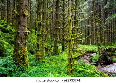Amazing nature landscape view of north scandinavian pine forest. Forest natural. Location: Scandinavian Mountains, Norway. Artistic picture. Beauty world.