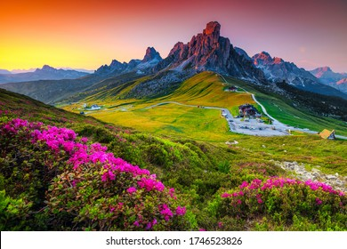 Amazing nature landscape and winding road on the mountain pass. Blossoming rhododendron flowers on the hills with Giau pass at sunset, Dolomites, Italy, Europe