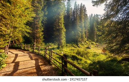 Amazing nature lanscape. Scenic image of fairy-tale woodland in sunlit. Hiking trail in autumn forest under sunlight. Popular travel destination. Awesome natural Background.
