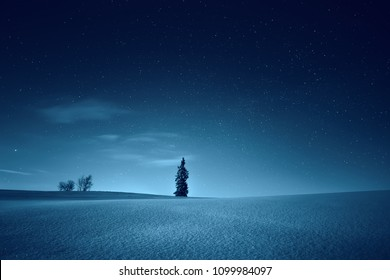 Amazing night landscape. Night winter scene. Sky full of stars over lonely tree in field. Stunning night background.