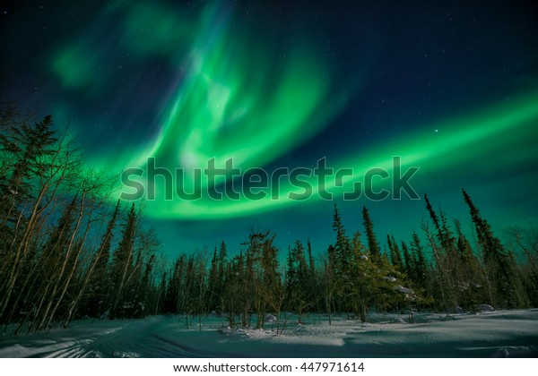 Amazing northern lights flying over the forest in yellowknife during a strong solar storm