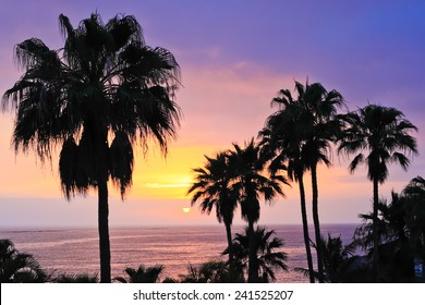 Amazing ocean sunset with palm trees.