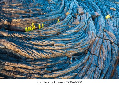 Amazing old lava pattern and new fern growing through it in Hawaii Volcanoes National Park, Big Island, Hawaii