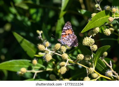 Amazing orange butterfly was standing on a green leaf