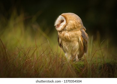 Amazing owl bird sitting on tree stump. Beautiful natural scene, very peaceful and relaxing. Colorful with pleasant warm evening light.