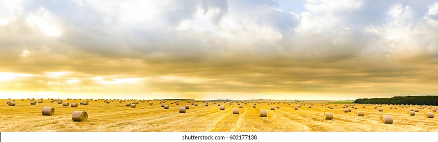 Amazing panorama of straw bales on open field at sunrise golden hour