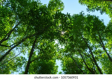 amazing panorama view of bright sun beam shining through the branch of tree in the sunny day