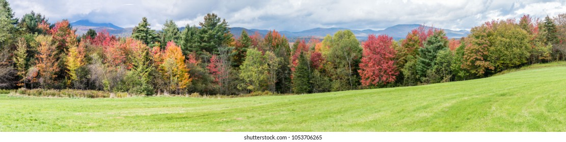 Amazing  panoramic view of fall foliage colourful forest