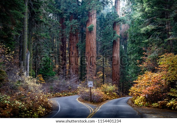 Amazing photo of a divided road in Sequoia National Park in the autumn with amazing colored leaves.